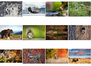 Monthly Scenes of North American Wildlife 2018 Calendar